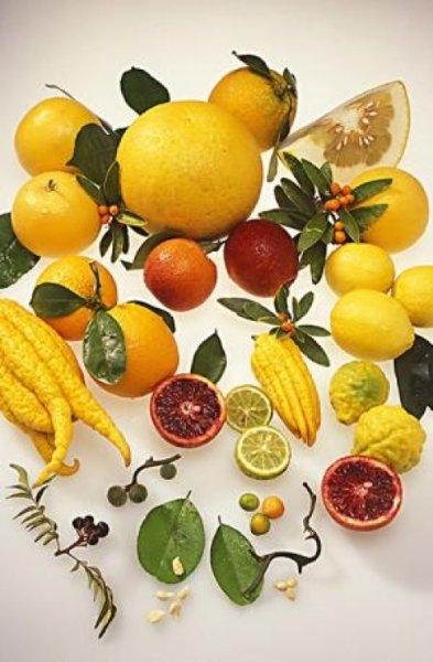 citrus cornucopia