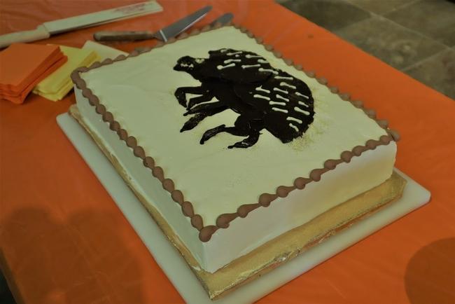 shot hole borer cake