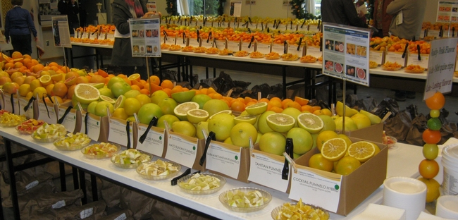 citrus display