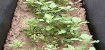 organic herbicide live for Topics in Subtropics Blog