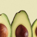 avocado varieites