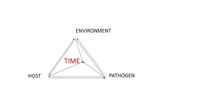 disease pyramid