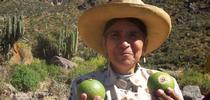 Sanky fruit for Topics in Subtropics Blog