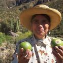 Sanky fruit