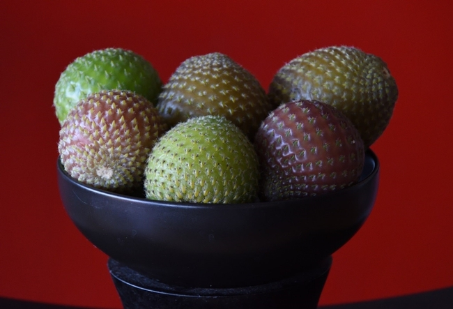 rumpa fruit 1