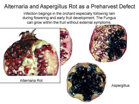 pomegranate black heart