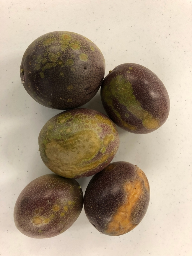 passionfruit scarring group