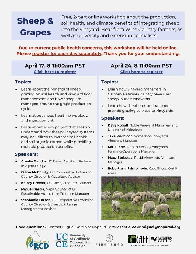 Sheep in Vineyards flier