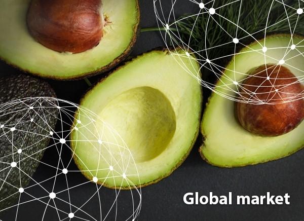 Global Avo Market