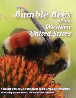 bumble bee xerxes
