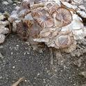 mushroom clusters