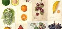fruit collection for Topics in Subtropics Blog