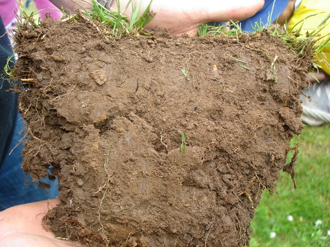 soil pores