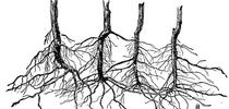 interconnected root system for Topics in Subtropics Blog