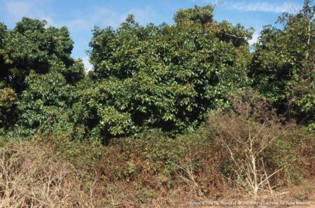 weeds bordering avocado orchard