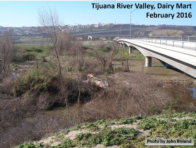 Tijuana willows shot hole