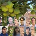 UCR citrus group