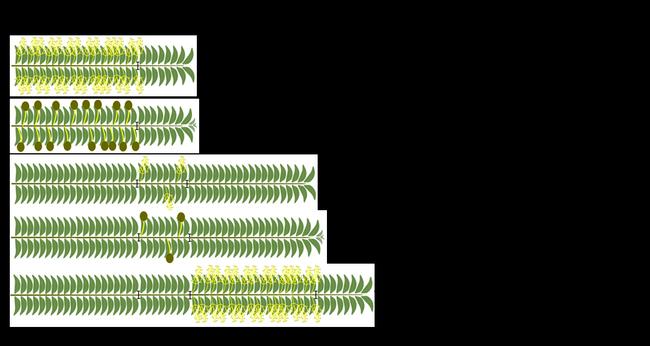olive fertilization 1