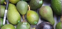 avocado diversity for Topics in Subtropics Blog