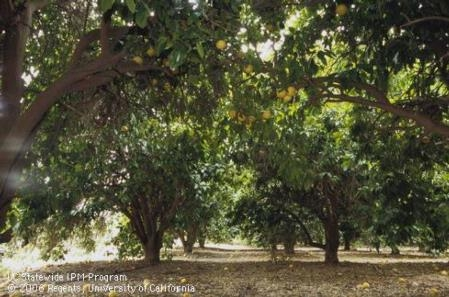 UC Riverside's Citrus Day will be held on January 26. Register today to reserve your spot!