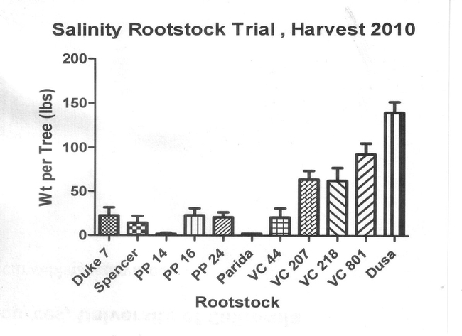 Table 1. Number of surviving avocado trees according to rootstock three years after the 2007 freeze.