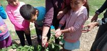 Kohn Garden for UCCE Tulare in Action! Blog