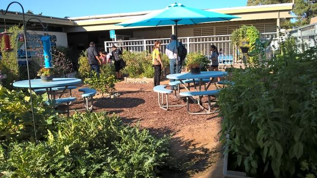 School garden at Arizona Middle