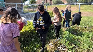 UCCE Master Gardeners working with garden club students