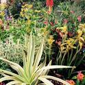Beautiful low water use plants