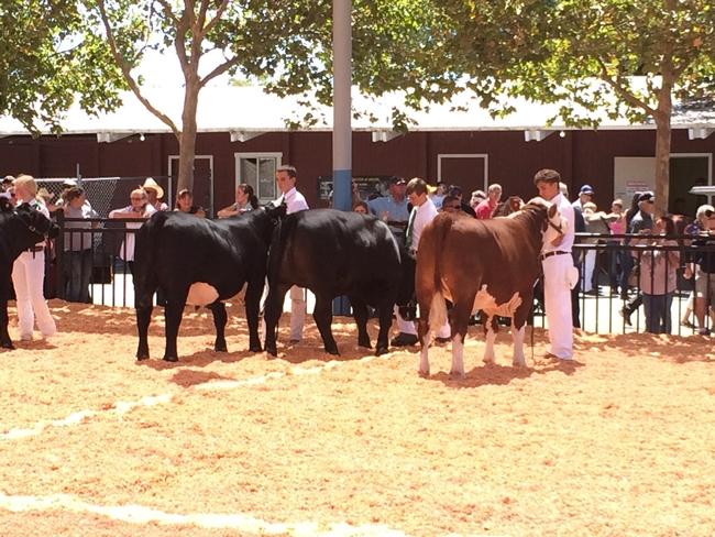 2014 SCF Beef show