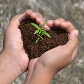 seedling-growing-in-hands-heart-shape-soil