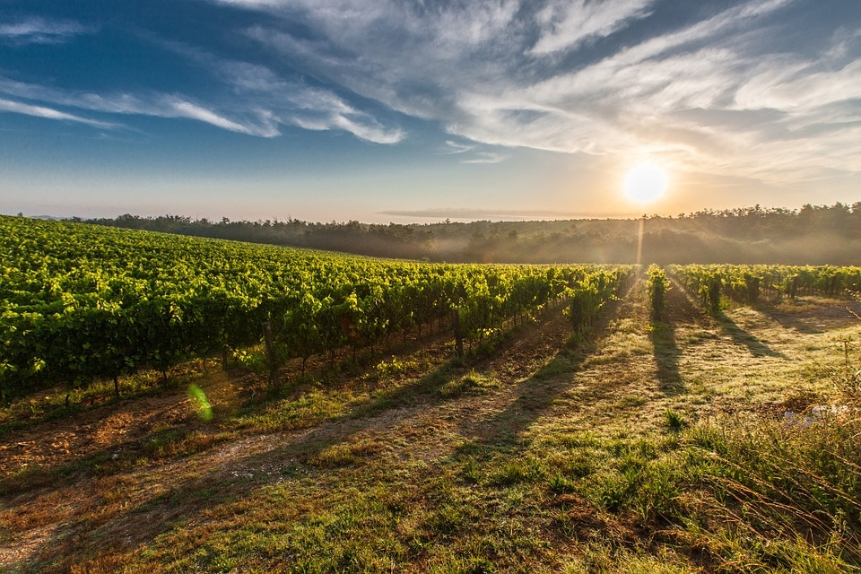 Fps Provides The Foundation Vines For California Grapevine Registration And Certification Program In Department Of Food Agriculture