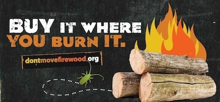 Firewood.ca.gov