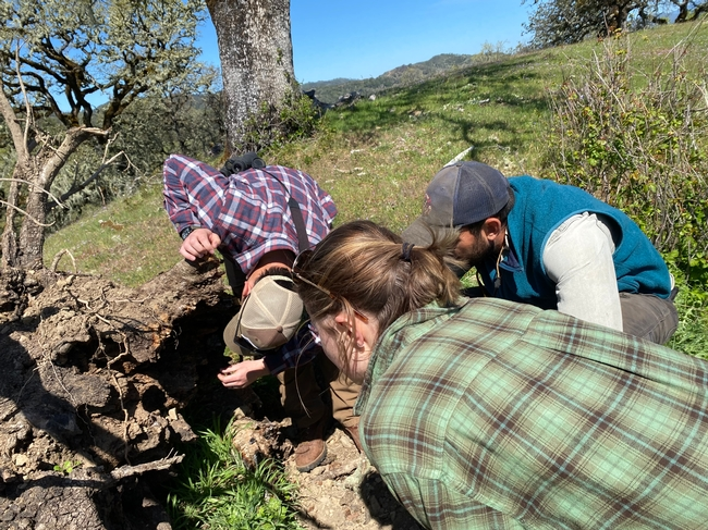 UCCE Staff conduct site visit and discuss forest health and vegetation management with landowner. Photo credit UCCE Sonoma