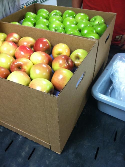 It's apple tasting time!
