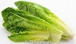 lettuce blog1