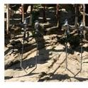 Photos 1-3. Blind cultivation weeders: Finger weeders - left, torsion weeders - middle and spring tine weeder – right
