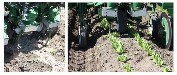 Photos 4 & 5. The Tillet Weeder is a commercially available mechanical weed control machine that uses computer technology and a spinning blade to remove weeds. Left photo: The disc-shaped cultivation blades are lifted up so you can observe the notched cut-out that allows the blade to spin around crop plants. Right photo: Thinning lettuce.
