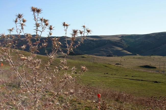 View from our experiment site near Petaluma
