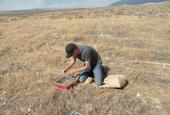 Photo:Thomas Stewart, Brigham Young University graduate student on Susan Meyer's research team, inoculates field plots with P. semeniperda inoculum. Credit: Susan Meyer