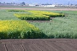 USDA photo: cover crops