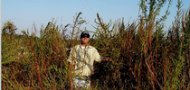 Extension agent in Palmer amaranth for UC Weed Science Blog
