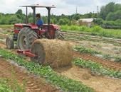 Straw roller in the field