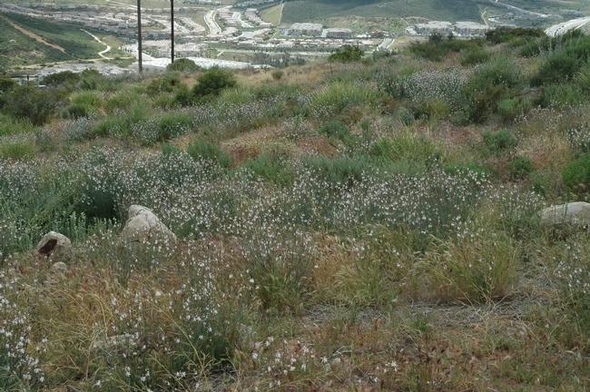 restoration site in San Diego County