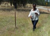 Fadzayi Mashiri walks through a patch of medusahead in Mariposa County.