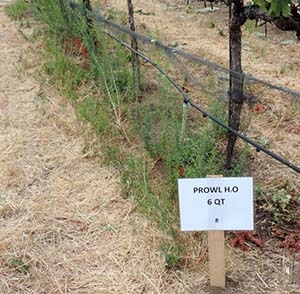 The herbicide Prowl performed nearly twice as well on vineyard weeds when combined with Alion or Matrix.