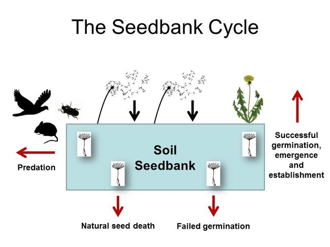 CWSS 2015 SEEDBANKS SOSNOSKIE 2