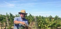 J Roncoroni vineyard field day June 2015 from Twitter for UC Weed Science Blog