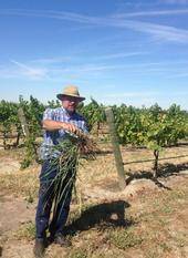 J Roncoroni vineyard field day June 2015 from Twitter