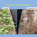 'Suppress' organic herbicide